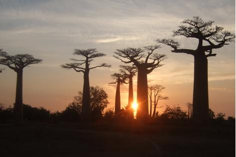baobabs-palissandrecoteouest-hotel
