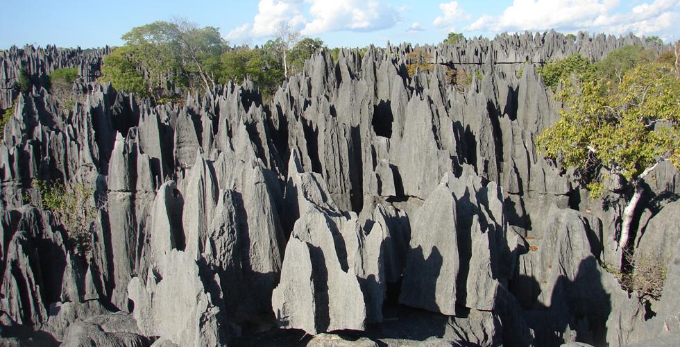Foret-tsingy