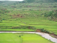 riziére Madagascar